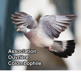 ASSOCIATION OUVRIERE COLOMBOPHILE