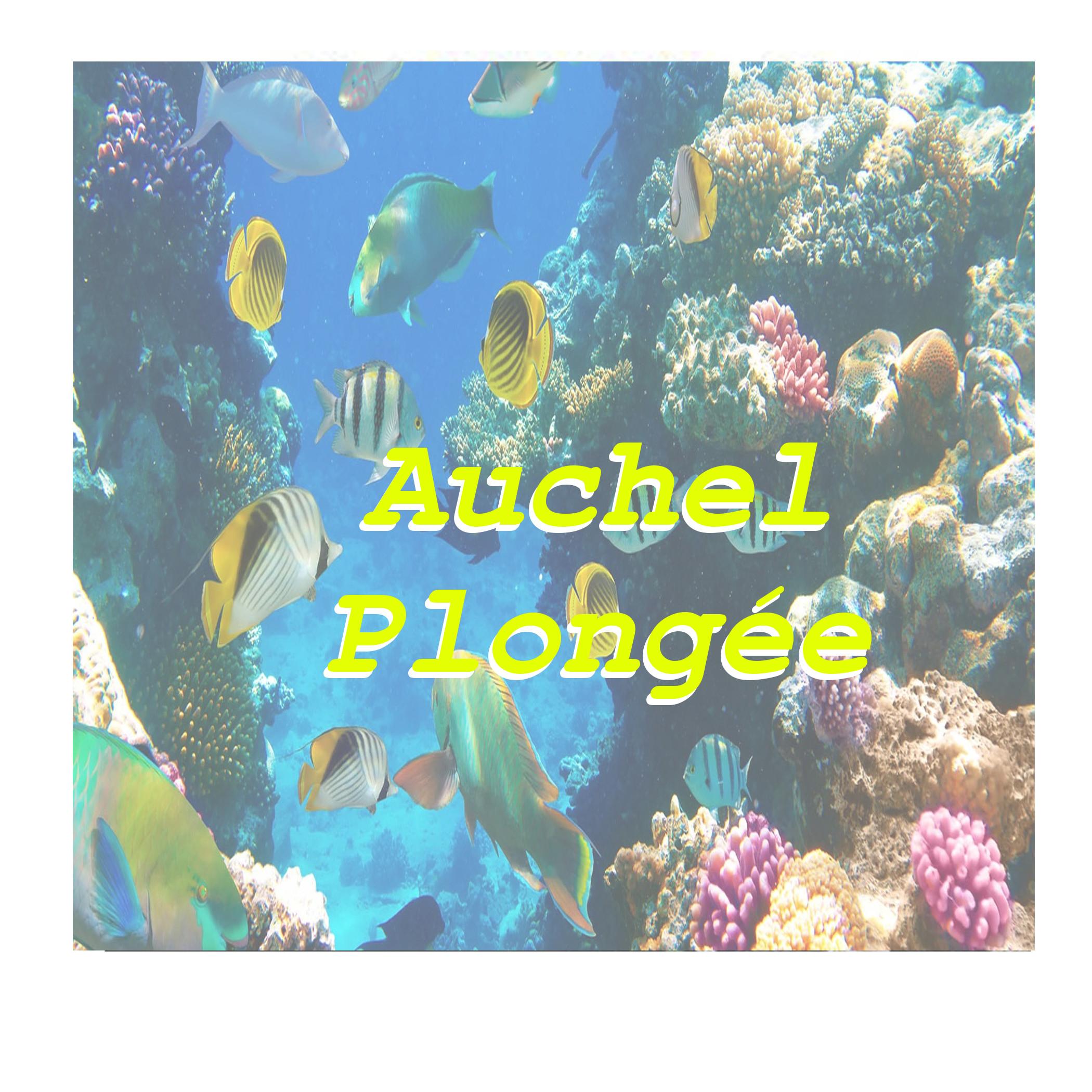 AUCHEL PLONGEE